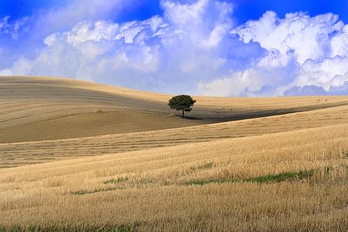 Economia attuale della Spagna - Agricoltura